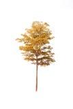 Tree isolated Stock Photography