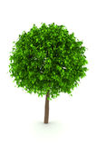 Tree isolated on white background Stock Images