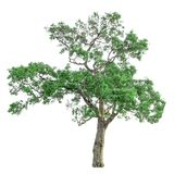 Tree isolated on a white background with clipping path. For web design graphic Stock Photos