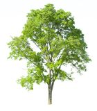 Tree isolated on a white background with clipping path. For web design graphic Stock Images