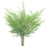 Tree isolated on a white background with clipping path. For web design graphic Stock Image