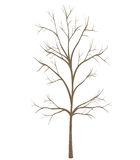 tree isolated on white background Stock Photography