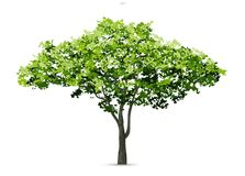 Tree isolated on white background with soft shadow. Use for landscape design, architectural decorative. Park and outdoor object idea for natural article both vector illustration