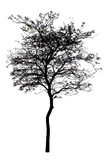 A tree is isolated on white Royalty Free Stock Photography