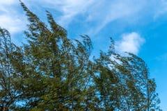 Tree isolation on white background royalty free stock image