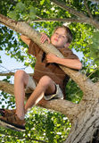 Tree Issues. Unhappy little boy sitting up in the branches of a tree and scowling downward Stock Photography