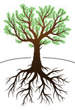 Tree and its roots vector illustration