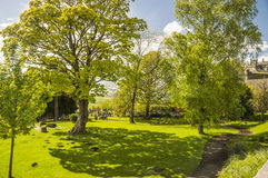 A tree and its shadow, Stirling Castle, Scotland. A tree and its shadow over the green grass in spring Royalty Free Stock Photography