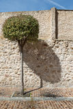 The tree and its shadow Stock Image