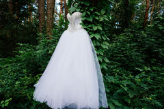 Tree with ivy in the forest with white wedding dress hanging. On it Royalty Free Stock Photos