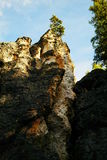 Tree on a jagged cliff. A tree on a jagged cliff near the Grand Canyon of Yellowstone Stock Images