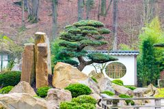 Tree in the japan garden, with big stones and small building stock photography