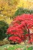 A tree in a japanese garden Stock Photos