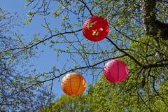 Tree with japanese lantern for Hanami. In april we are celebrating Hanami Stock Image