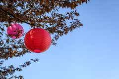 Tree with japanese lantern for Hanami. Traditional celebration in Japan today we celebrate Hanami in Sweden too Stock Photos