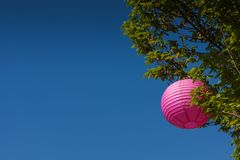 Tree with japanese lantern for Hanami. Traditional celebration in Japan Royalty Free Stock Photography