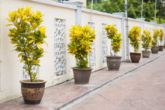 Tree in jardiniere for decoration Royalty Free Stock Photos