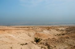 Tree in Judaean Desert Royalty Free Stock Photos
