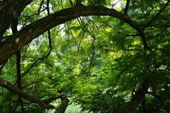 Tree, Jungle, Green, Branches Royalty Free Stock Image