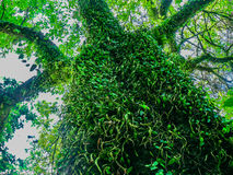 The tree in the jungle. The rainforest on the island in Thailand Stock Images