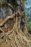Tree jungle temple Koh Ke, Cambodia Royalty Free Stock Photo