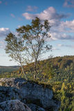 Tree in the Jura Poland Royalty Free Stock Photo