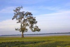 Tree at Kaziranga National Park royalty free stock images