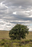 Tree in Kenya Royalty Free Stock Photos