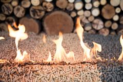 Tree kind of pellets in fire. Infront of pile of wood royalty free stock image
