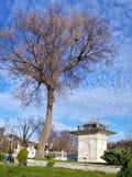 Tree and kiosk Royalty Free Stock Photography