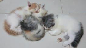 Tree kittens are sleeping stock video
