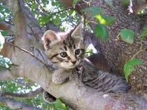 Tree Kitty. Kitten in Tree stock images