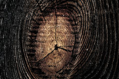 Tree knot Royalty Free Stock Photography