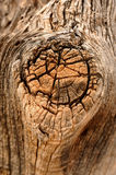 Tree knot (burl) Stock Photos