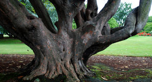 Tree of Knowledge. This fabulous tree is located in Rotorua, New Zealand Stock Photos