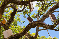 Tree of Books and Knowledge Stock Photography