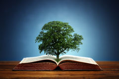 Tree of knowledge. Book or tree of knowledge concept with an oak tree growing from an open book