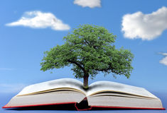 Tree of knowledge. The tree of knowledge concept stock image