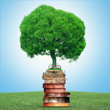 Tree of knowledge Stock Photos