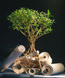 Tree of knowledges. A tree with papyrus in roots Stock Image