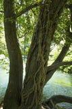 Tree in Krka National Park Croatia Europe Stock Image