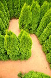 Tree labyrinth Royalty Free Stock Image