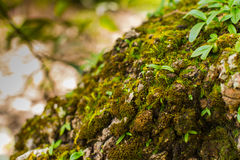 Tree laden with moss and orchid Stock Image
