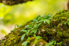 Tree laden with moss and orchid Stock Photography