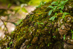 Tree laden with moss and orchid Stock Photos