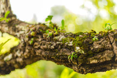 Tree laden with moss and orchid Stock Photo