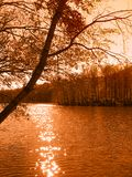 Tree by the lake. Beautiful tree by the lake (orange toned Stock Photography
