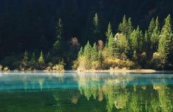 Tree lake Royalty Free Stock Images