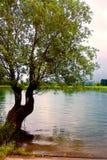 Tree and lake. A tree near a beautiful lake Stock Photos