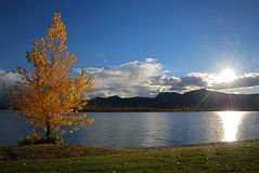 Tree and lake royalty free stock photography